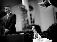 PARDON ME..The pardoned turkey, Pumpkin responded to applause as President George Bush, who led the yearly Pardoning of the National Thanksgiving Turkey ceremony at The White House, Wednesday, November 26, 2008. Pumpkin gets applause as the guest of honor during the ceremony.