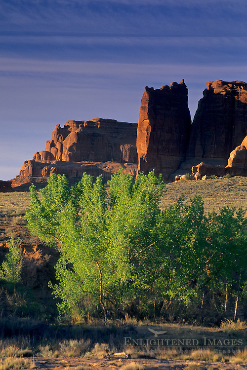 Cottonwood trees in Courthouse Wash, Arches National Park, UTAH