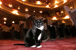 Feature on Theatre Cats in the west end. Boy cat (white nose) and girl cat 2000. Photo by Andrew Parsons/i-Images.