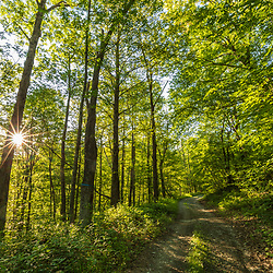 Morning in the forest on Egg Mountain in Sandgate, Vermont.