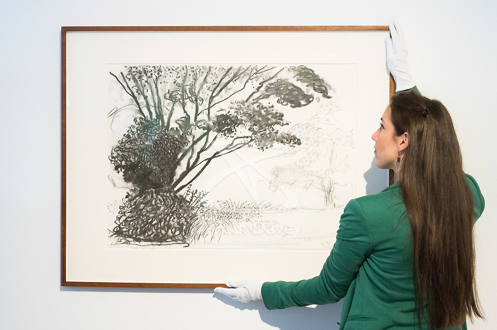 "Christies, St James, London, March 4th 2016. A gallery assistant straightens David Hockney's ""Kilham to Rudston"", charcoal on paper from 2008 at the preview for the It's Our World charity auction at Christie's. Over 40 leading artists including David Hockney, Sir Antony Gormley, David Nash, Sir Peter Blake, Yinka Shonibare, Sir Quentin Blake, Emily Young and Maggi Hambling have committed artworks to the It's Our World Auction in support of The Big Draw and Jupiter Artland Foundation, to be sold at Christie's London on 10 March 2016.<br />  ///FOR LICENCING CONTACT: paul@pauldaveycreative.co.uk TEL:+44 (0) 7966 016 296 or +44 (0) 20 8969 6875. ©2015 Paul R Davey. All rights reserved."