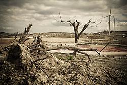 Corleto Perticara (PZ) 17.02.2009, Italy - Tempa Rossa - Speranze e realtà del giacimento Total in Basilicata. NELLA FOTO: Alcune nuove piantagioni di mele che si trovavano nei terreni ceduti a Total per il cantiere, sono state estirpate dalle ruspe lasciando un paesaggio desertico.