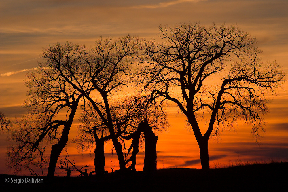 Cottonwood trees are silhouetted against an orange and blue sunset near Lincoln, Nebraska