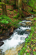 Forest stream in Plitvice Lakes National Park, Croatia