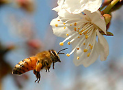 bee and a blossom