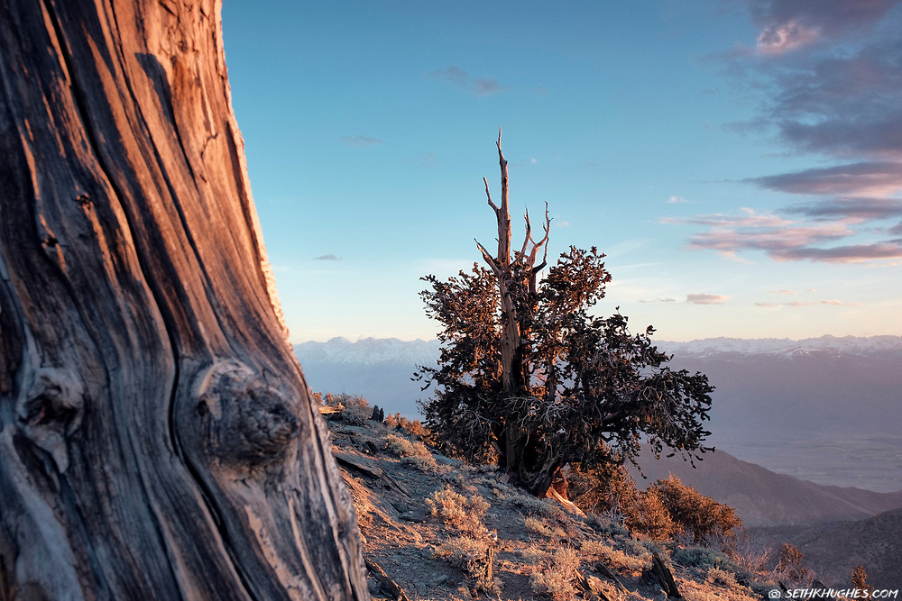 Ancient Bristlecone Pine Forest, Inyo National Forest, White Mountains, California