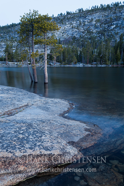 Trees grow out of the water at Vernon Lake, Yosemite National Park