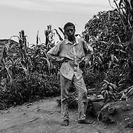 Cape Verde. path to Mosteiros village  from Fogo volcano  Fogo island     / Cap-Vert:  descente vers Mosteiros  pied du volcan pic de Fogo,  descente dans la plus grande forêt du  entre eucalyptus, mimosas, cafeiers, orangers, citronniers, papayers et bananiers  ile de Fogo    /20