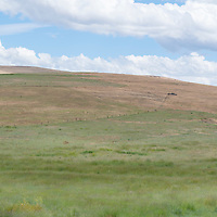 Ranchers on horses near Fossil, Oregon