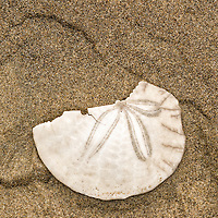 SandDollar on Beach