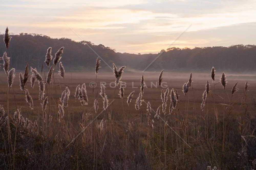Tall grass in East Hampton, NY