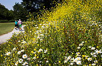 HALFWEG - Wilde bloemen op de baan van de   Amsterdamse Golf Club   COPYRIGHT KOEN SUYK