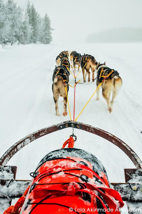 Dog sledding across frozen lakes in Jokkmokk, Swedish Lapland