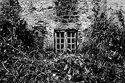 The decaying basement window of an old Irish house