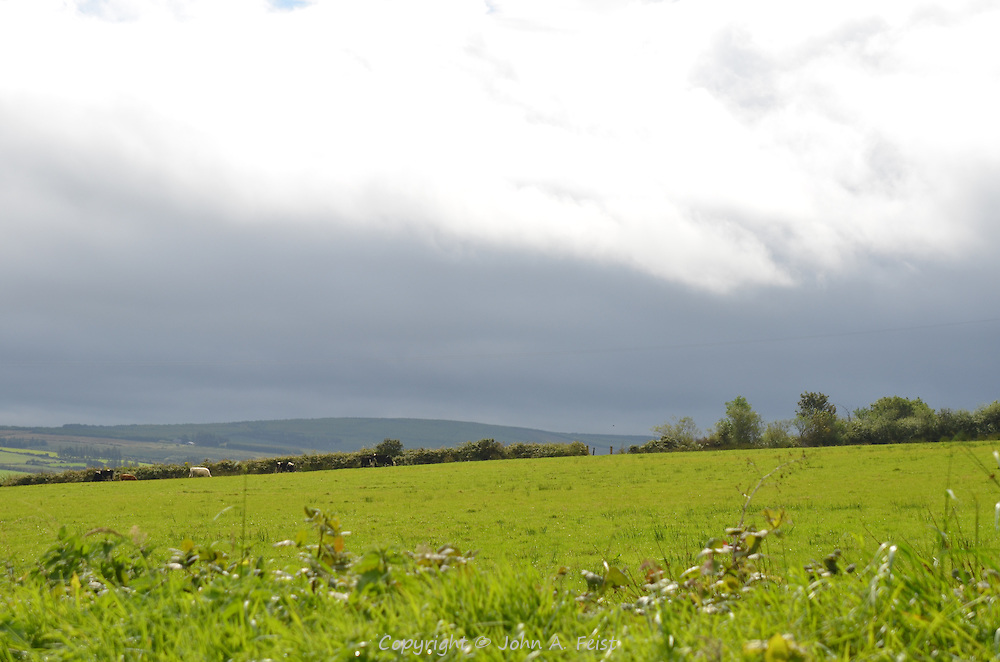 Looking out over the farms and cattle of Castleisland, County Kerry, Ireland to rain in the distance.