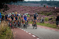 Peloton at the Posbank during the Arnhem Veenendaal Classic at Rheden, Gelderland, The Netherlands, 19 August 2016.<br /> Photo by Pim Nijland / PelotonPhotos.com | All Rights Reserved