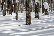Long shadows stretch and bend through the forest.<br />