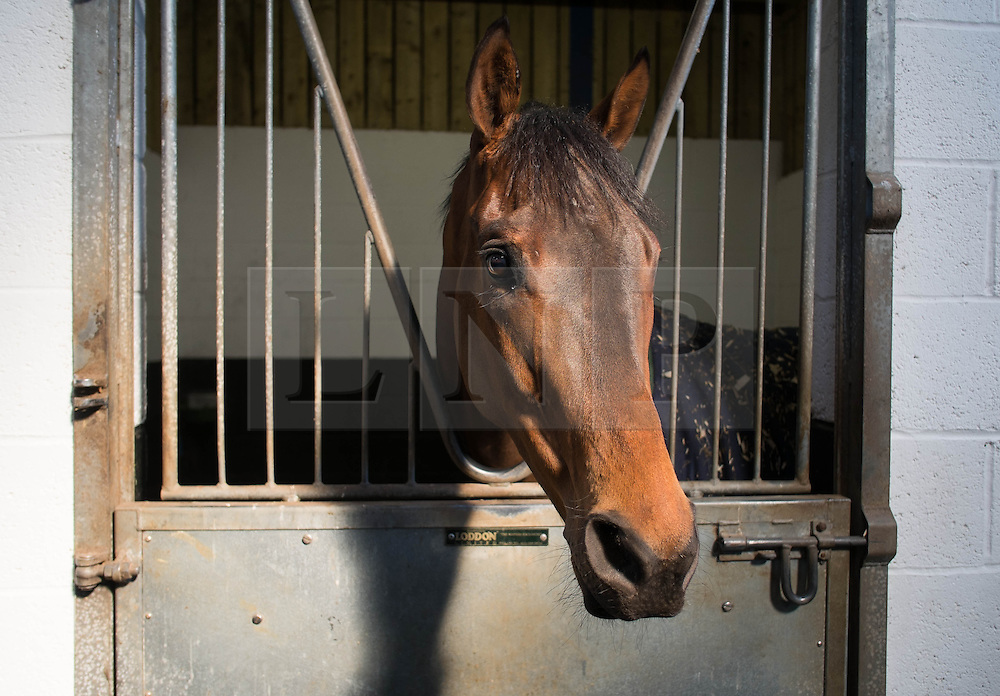 © Licensed to London News Pictures. 22/03/2014<br /> <br /> Middleham, North Yorkshire<br /> <br /> A race horse waits in a stall before going for a morning run at the Mark Johnston stables in Middleham, North Yorkshire. Race horses have been trained in Middleham for over 200 years using the extensive gallops on the high moor. There are currently 15 stables based around the small Yorkshire village.<br /> <br /> Photo credit : Ian Forsyth/LNP