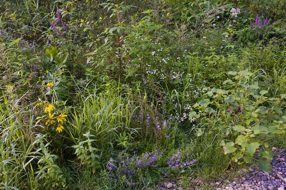 Pioneer vegetation on gravel bank at the river Allier. Pont-du-Chateau, Auvergne, France.