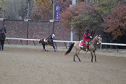 Breeder's Cup 2010 morning workouts at Churchill Downs Wednesday, Nov. 3, 2010.  Photo by Jonathan Palmer