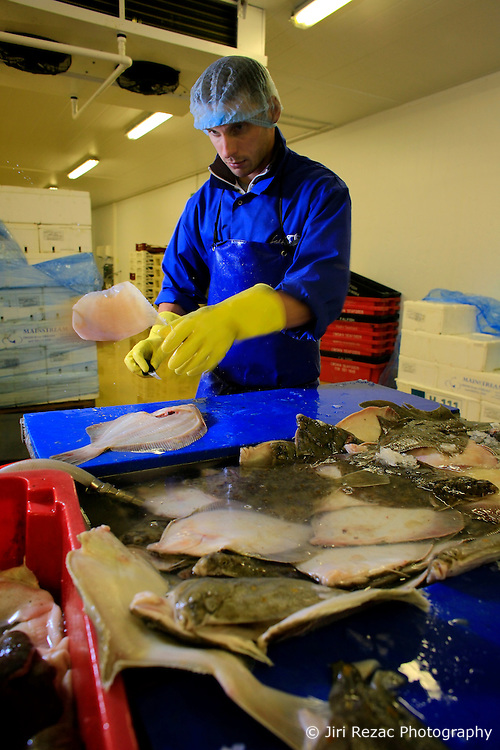 UK ENGLAND CORNWALL REDRUTH 11JUN08 - Workers fillet handline caught Plaice at the Falfish processing factory in Redruth, Cornwall. The company employs around 100 people and has been operating for 30 years in the South-West of England...jre/Photo by Jiri Rezac / WWF UK..© Jiri Rezac 2008..Contact: +44 (0) 7050 110 417.Mobile:  +44 (0) 7801 337 683.Office:  +44 (0) 20 8968 9635..Email:   jiri@jirirezac.com.Web:    www.jirirezac.com..© All images Jiri Rezac 2008 - All rights reserved.