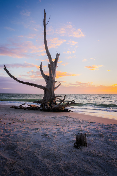 Dead trees line the coast of Lover's Key in Florida