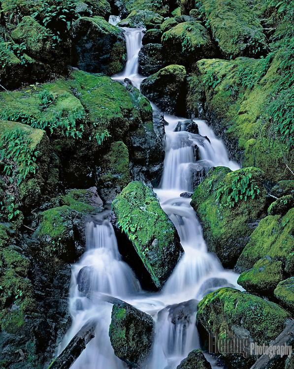 After winter storms, Cataract Falls roars to life and the surrounding canyon turns vibrant green.