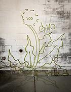 graffiti in New Orleans; dandelion