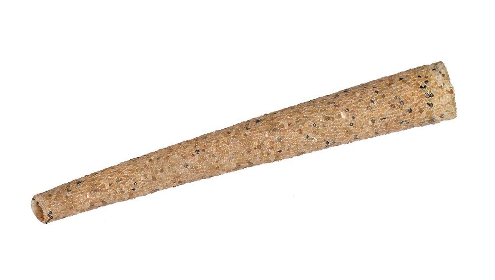 Trumpet Worm - Lagis koreni