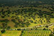 Green rolling plain of Alentejo nearby Monsaraz