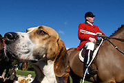 Fox hunting continues despite the ban
