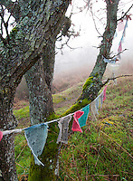 A worn string of prayer flags wave in the breeze as fog blankets Mt. Tolmie and the protected garry oak grove that surrounds it, above Victoria, BC