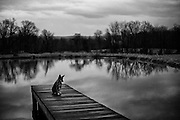 A lone dog sits on a dock on a pond under a foreboding dark sky.