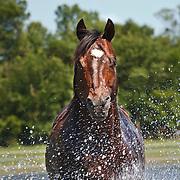 Smith Quarter Horse