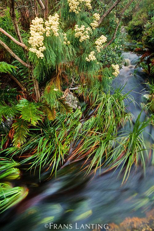 Stream in fynbos, Kogelberg Reserve, South Africa
