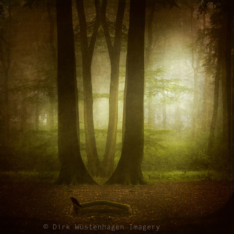 Forest scenery on a misty summer morning - manupulated photograph