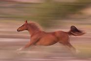 HORSES RUNNING, BLUR-PAN STYLE