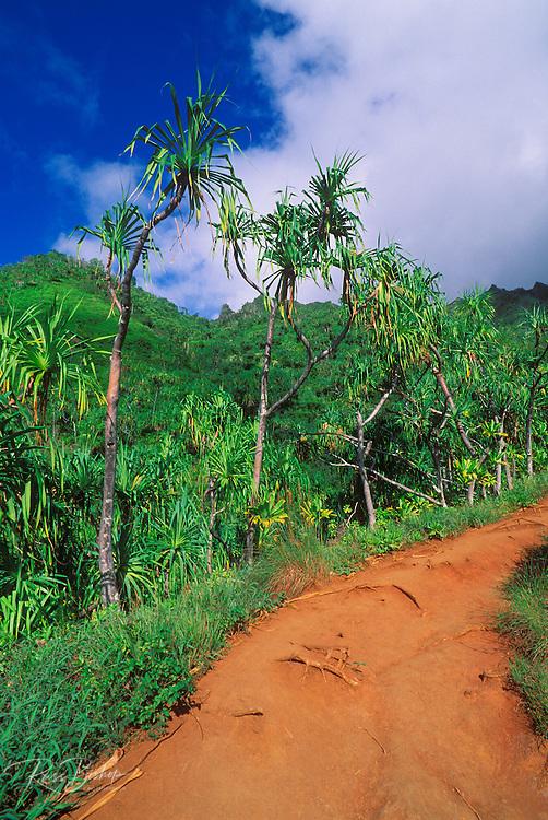 Hala trees and lush tropical hillsides along the Kalalau Trail on the North Shore, Na Pali Coast, Island of Kauai, Hawaii
