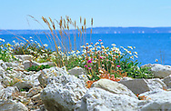 Rocks, wildflowers, grasses, Armeria maritima, view over Solent