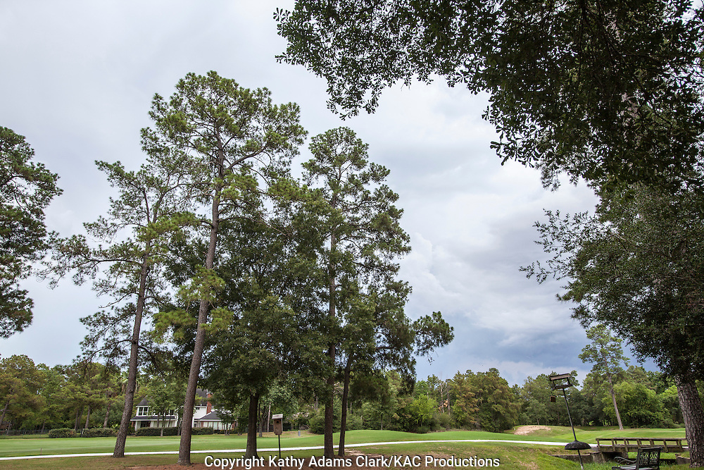 Raining on golf course in The Woodlands, Texas in summer.