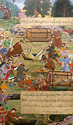 Akbar lifting captured cheetahs.  From the Akbarnama (Book of Akbar).  Comparison by Tulsi, painting by Narayan. Opaque watercolour and gold on paper, Mughal.  This painting records the first occasion (in 1560) when Akbar hunted cheetahs.