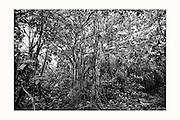 Black and White images. Sebastian Posingis