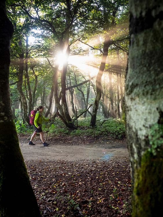 Women hiking through forest road in sunlight beam at Hohneck, Vosges, France