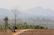A view of the Thai-Burma Border on December 23 of 2006 in Mae Sot area, Thailand. In the foreground is a farming field of Thailand, and on the background, behind the Moei river, is jungle untouched of Burma. .Burma has since 1962 been ruled by dictator Burman Regimes. Pro democrats and minority ethnics have since been object of human rights abuses and armed minority groups has appeared bringing a state of Civil War..This situation makes every days people to flee their villages to go to Thailand.