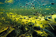Tadpoles populate a vernal pool in Susquehanna State Park near Havre De Grace, Md., on April 19, 2016. (Photo by Will Parson/Chesapeake Bay Program)