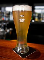 A pint of Moo Brew, Tasmanian Beer, Hobart, Tasmania, Australia