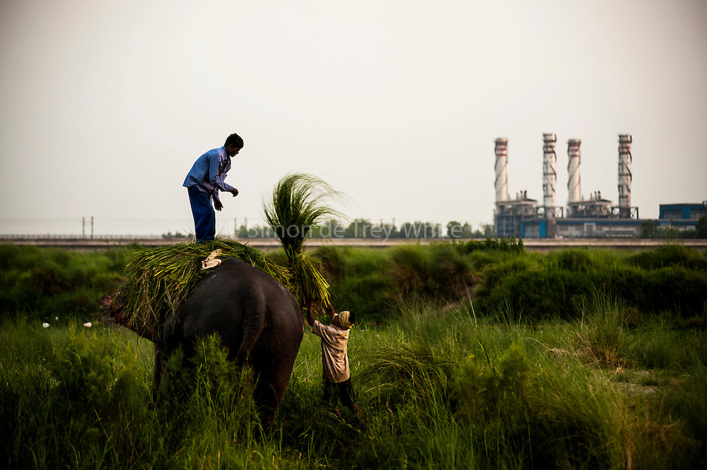 14th May 2014, Yamuna River, New Delhi, India. Handlers load fodder onto the back of an elephant at dusk on an island in the Yamuna River with a Gas Turbine Power Station behind, New Delhi, India on the 14th May 2014<br />