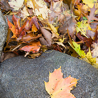 Colorful fallen leaves in the autumn