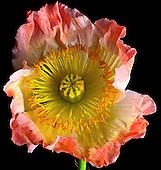 Floral Portfolio II