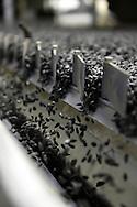 20/10/15 - SAINT MATHURIN - MAINE ET LOIRE - FRANCE - Usine de semences de tournesol LIMAGRAIN - Photo Jerome CHABANNE pour Limagrain